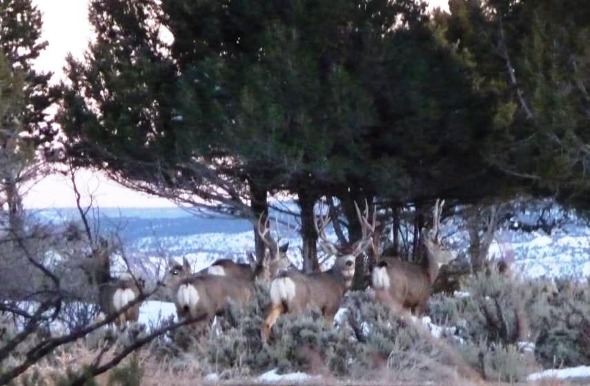 semi guided elk hunts colorado